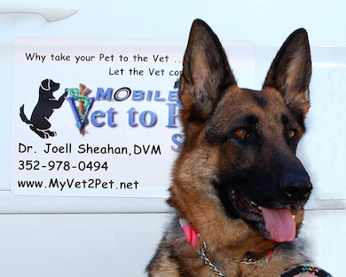 Why Mobile Vets Lake County