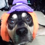 Tips for a Safe and (only slightly) Scary Howl-O-Ween