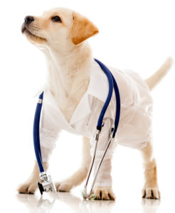 mobile vet client info puppy