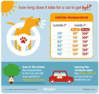 Dogs In Cars Heat Up