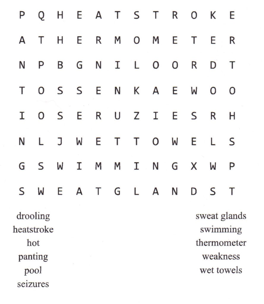 Summer Pet Care Word Puzzle